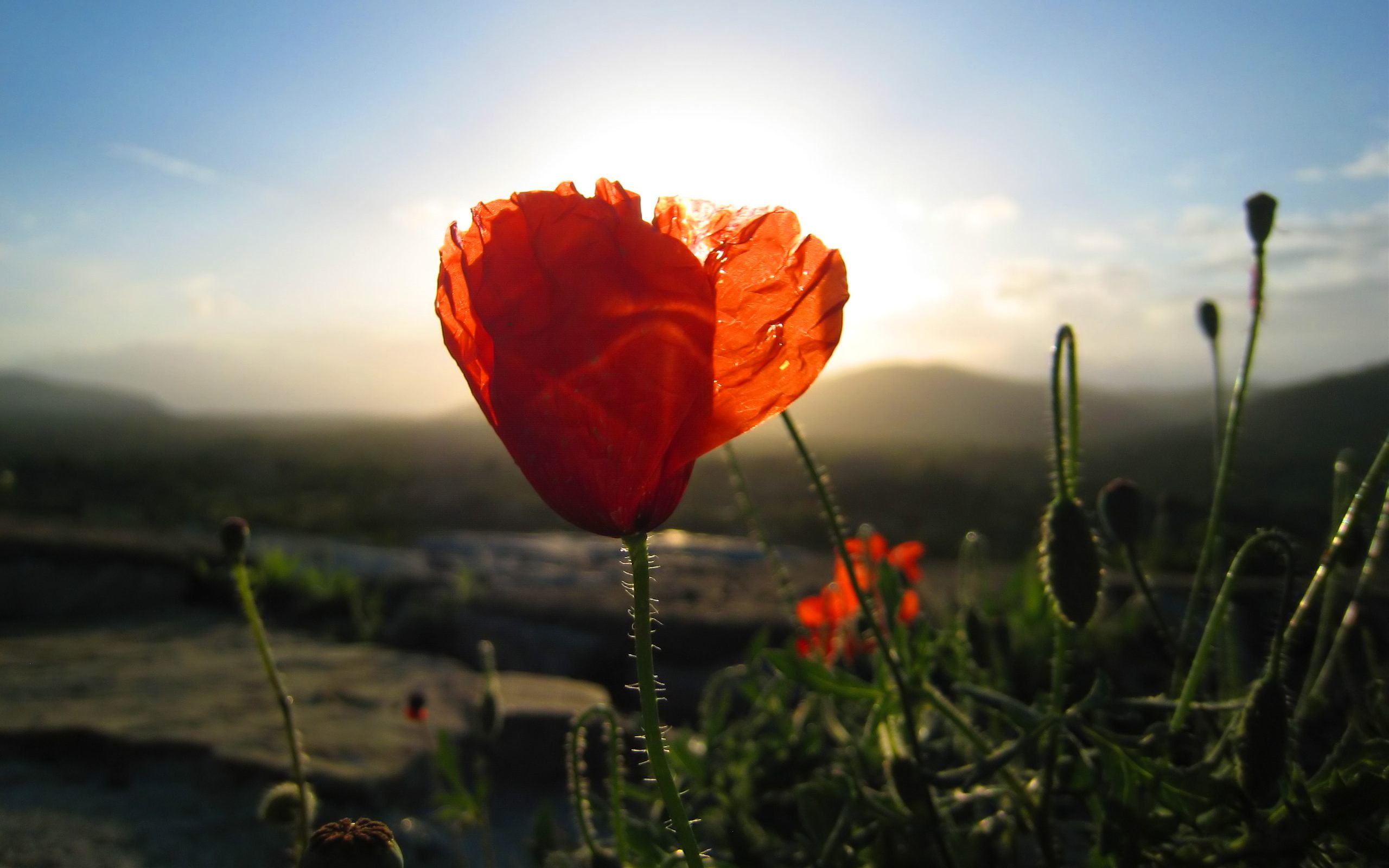 Karte Erde Abendsonne Mit Mohn Full Hd Wallpaper And Hintergrund