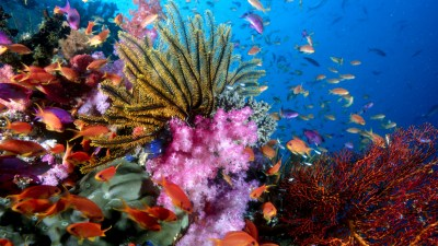 76 Sea Life HD Wallpapers | Background Images - Wallpaper Abyss