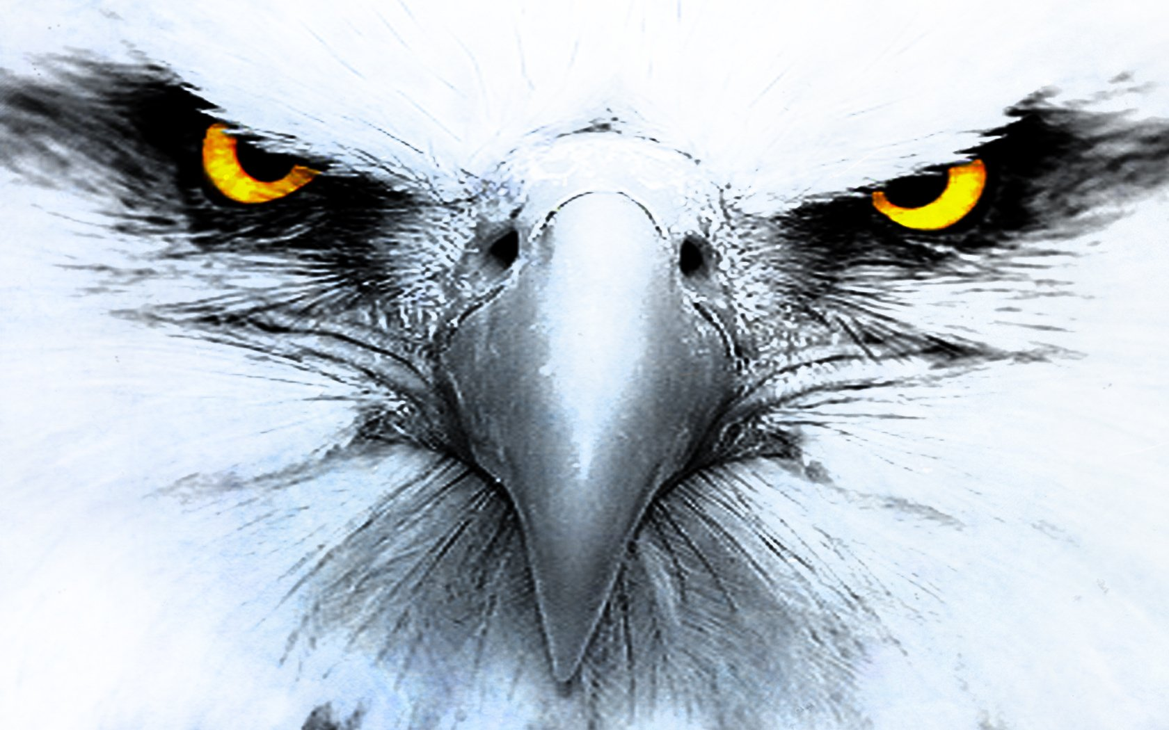 Hd wallpaper background id 150464 1680x1050 animal eagle
