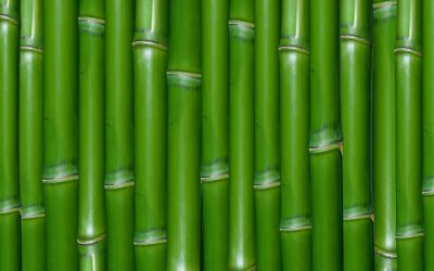 Bamboo HD Wallpaper | Background Image | 1920x1200 | ID:174934 - Wallpaper Abyss