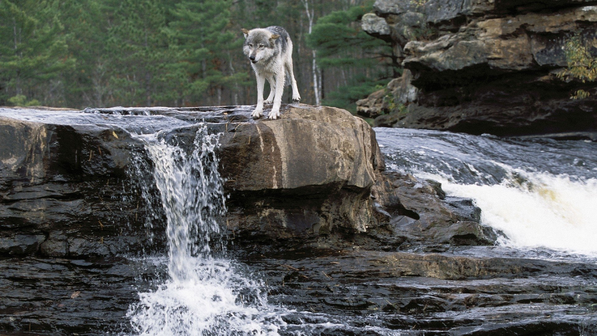 Cool Wallpapers Water Fall Loup Full Hd Fond D 233 Cran And Arri 232 Re Plan 1920x1080