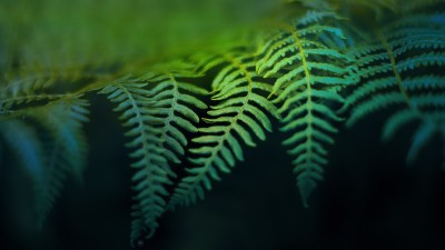 54 Fern HD Wallpapers | Background Images - Wallpaper Abyss