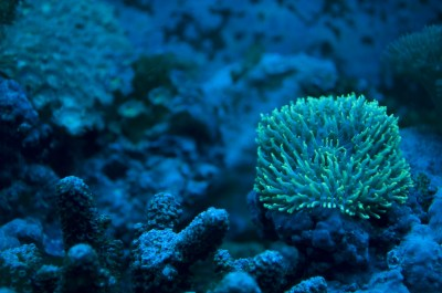 Sea Life Full HD Wallpaper and Background Image ...