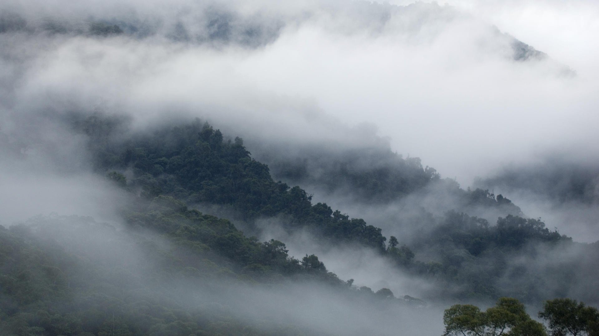Smoky Mountains Iphone Wallpaper Fog Full Hd Wallpaper And Background Image 1920x1080