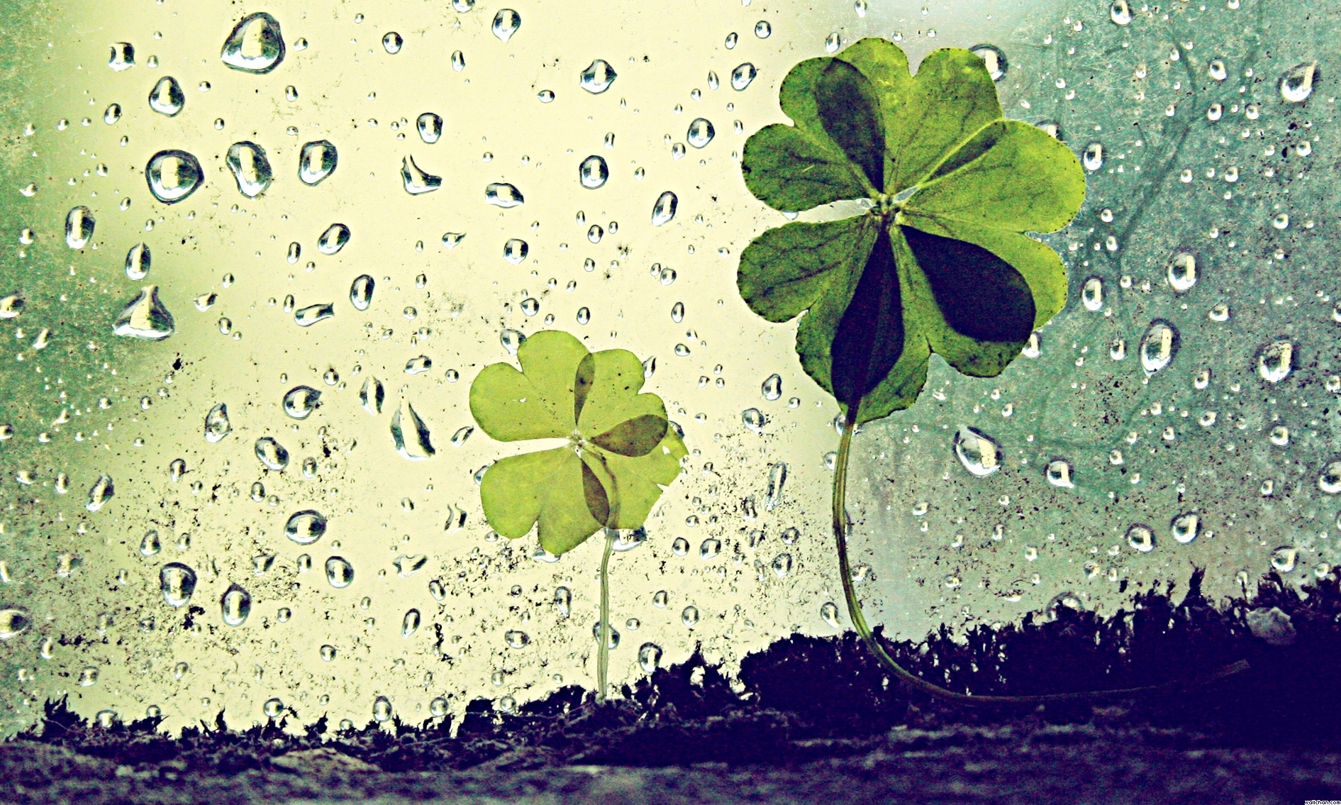 Green Day Iphone 5 Wallpaper Rain Drops Flower Leaf 1080p Green Water Wallpaper And