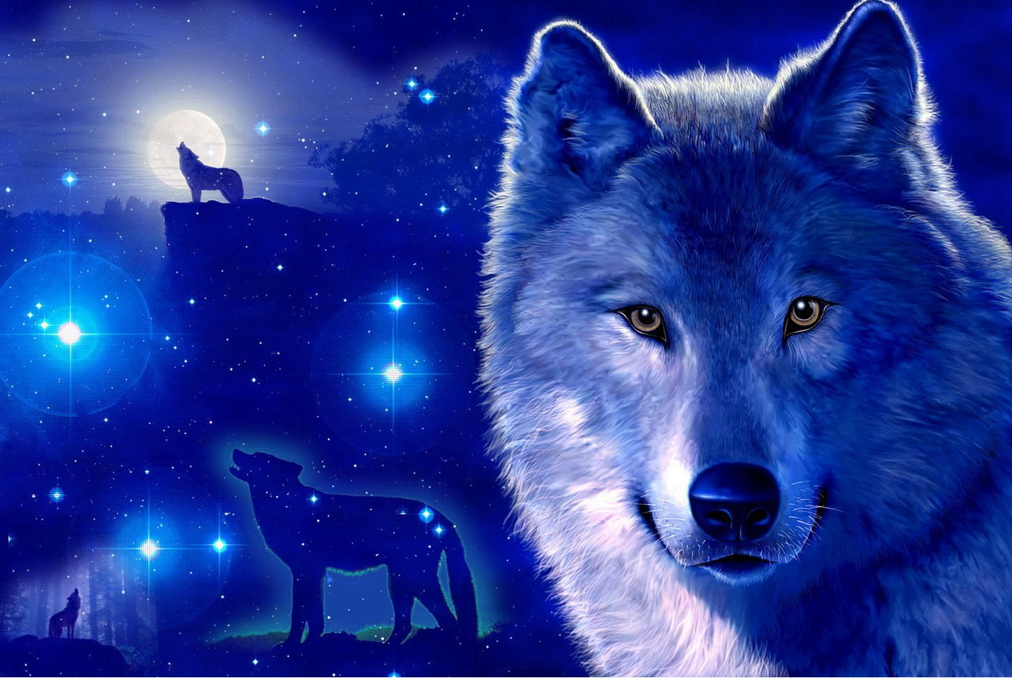 Coole Wolf Bilder Wolf Wallpaper And Hintergrund 1434x961 Id 289266