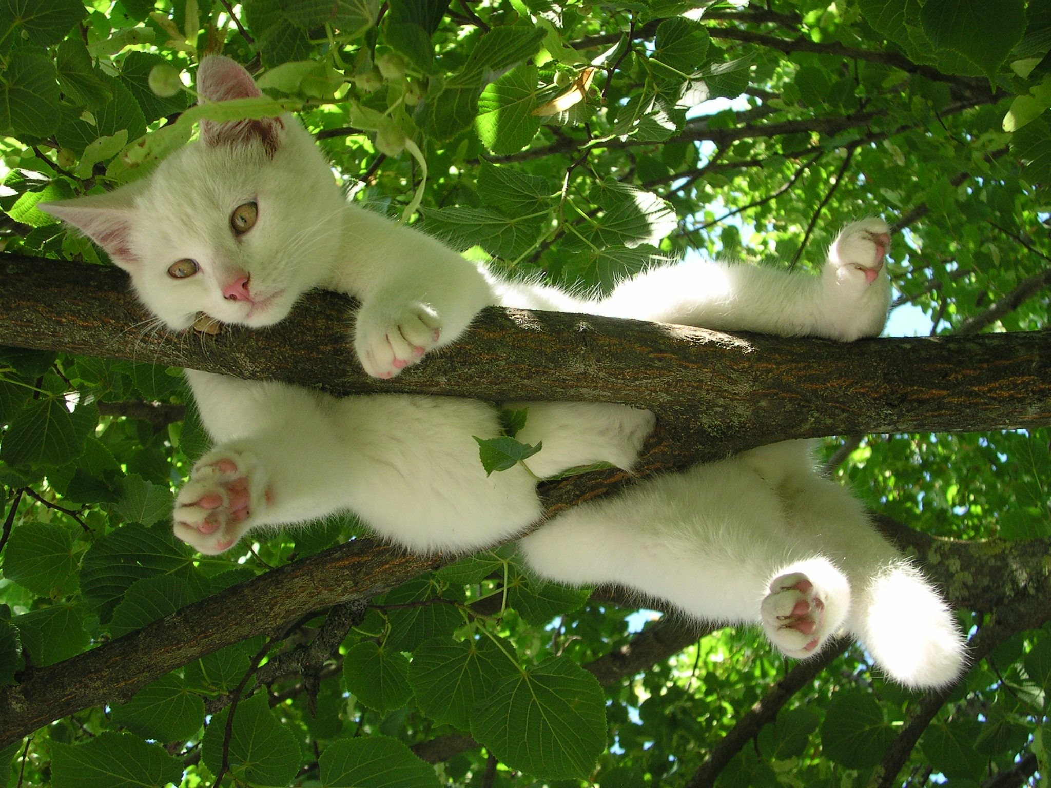 Iphone 5 Wallpaper Cute Pinterest White Cat Relaxing In A Tree Full Hd Wallpaper And