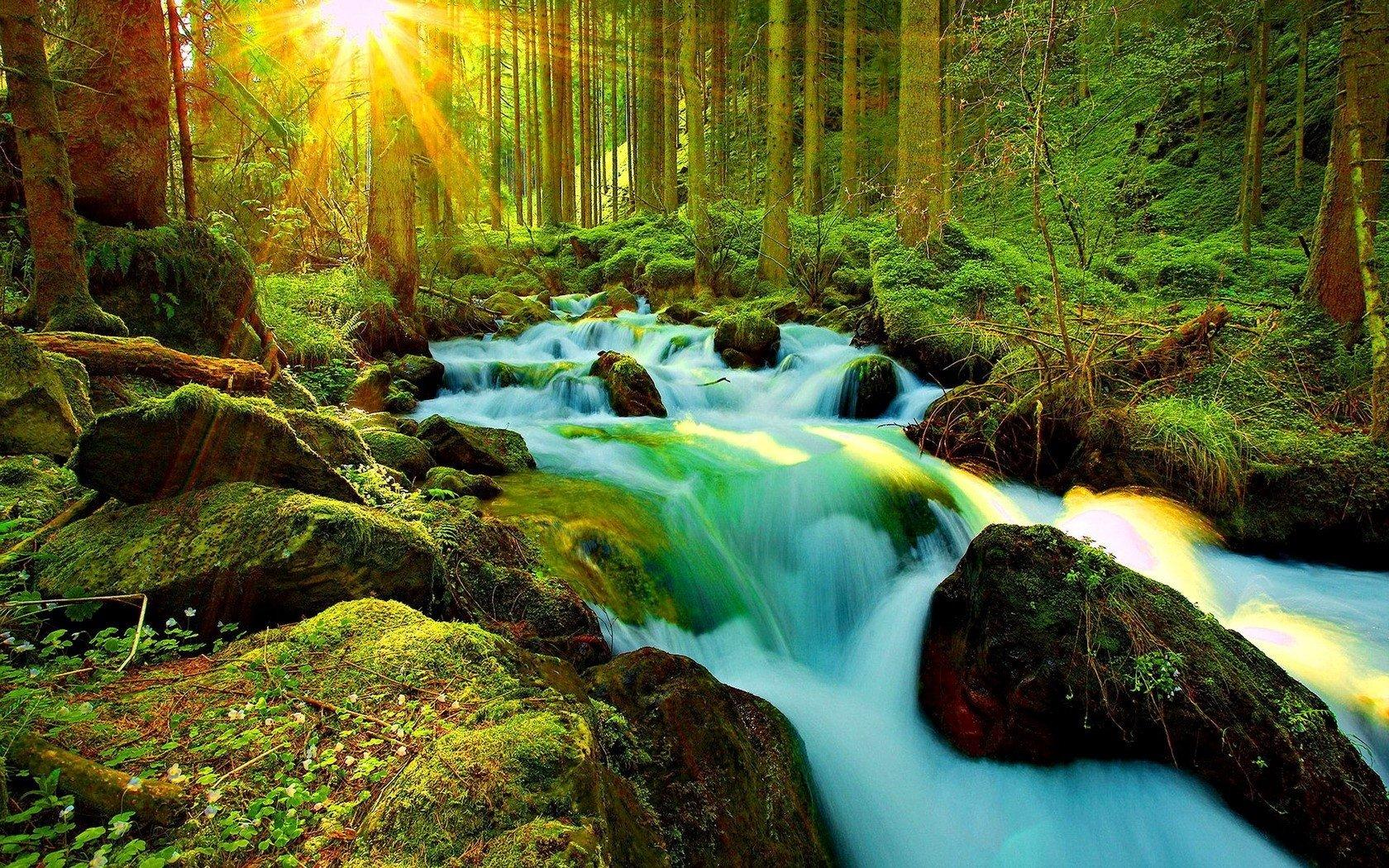 Jog Falls Hd Wallpaper Sunshine On Forest Stream Wallpaper And Background Image
