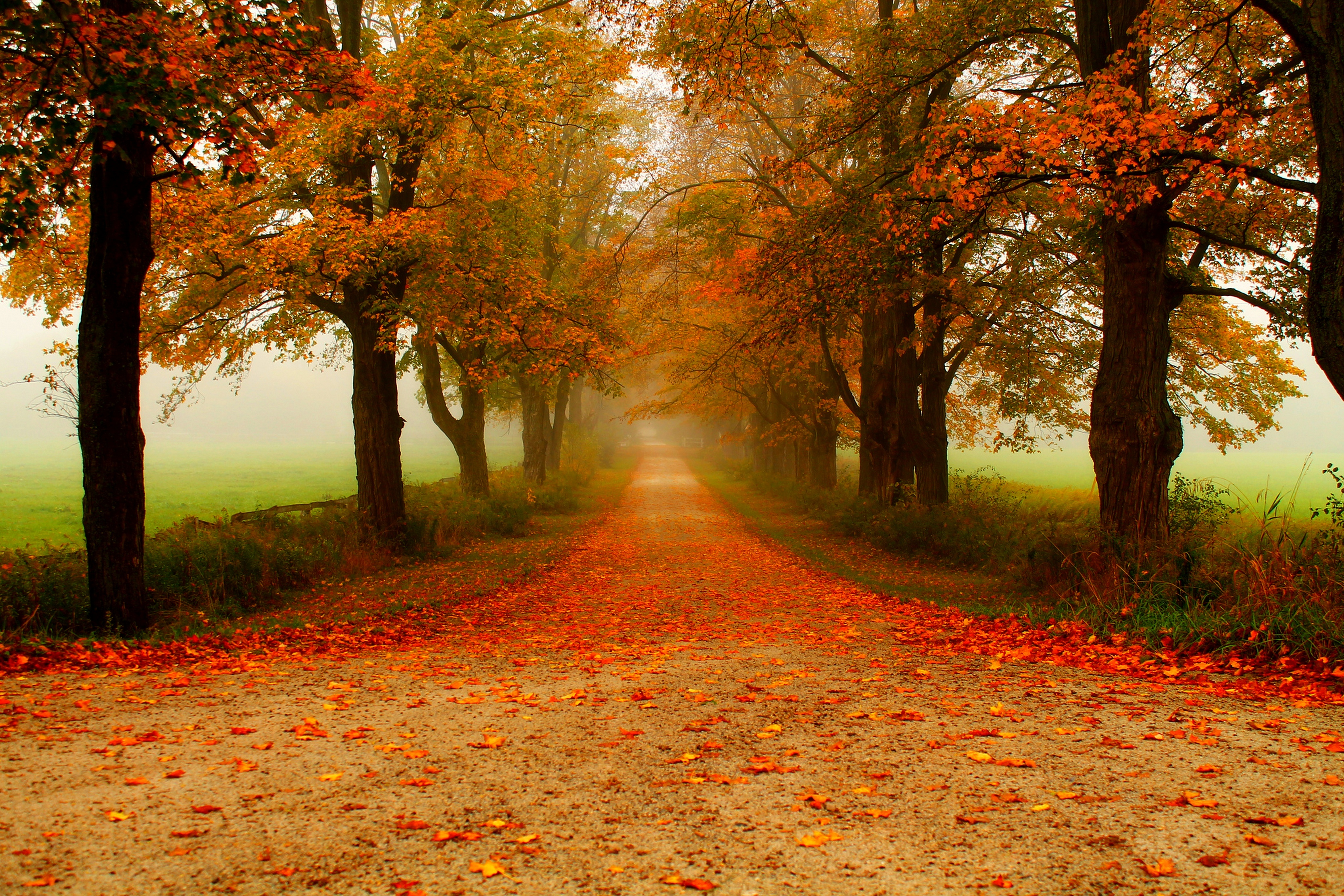 Wallpaper Images Of Fall Trees Lined Lake Autumn Path 4k Ultra Hd Wallpaper Background Image