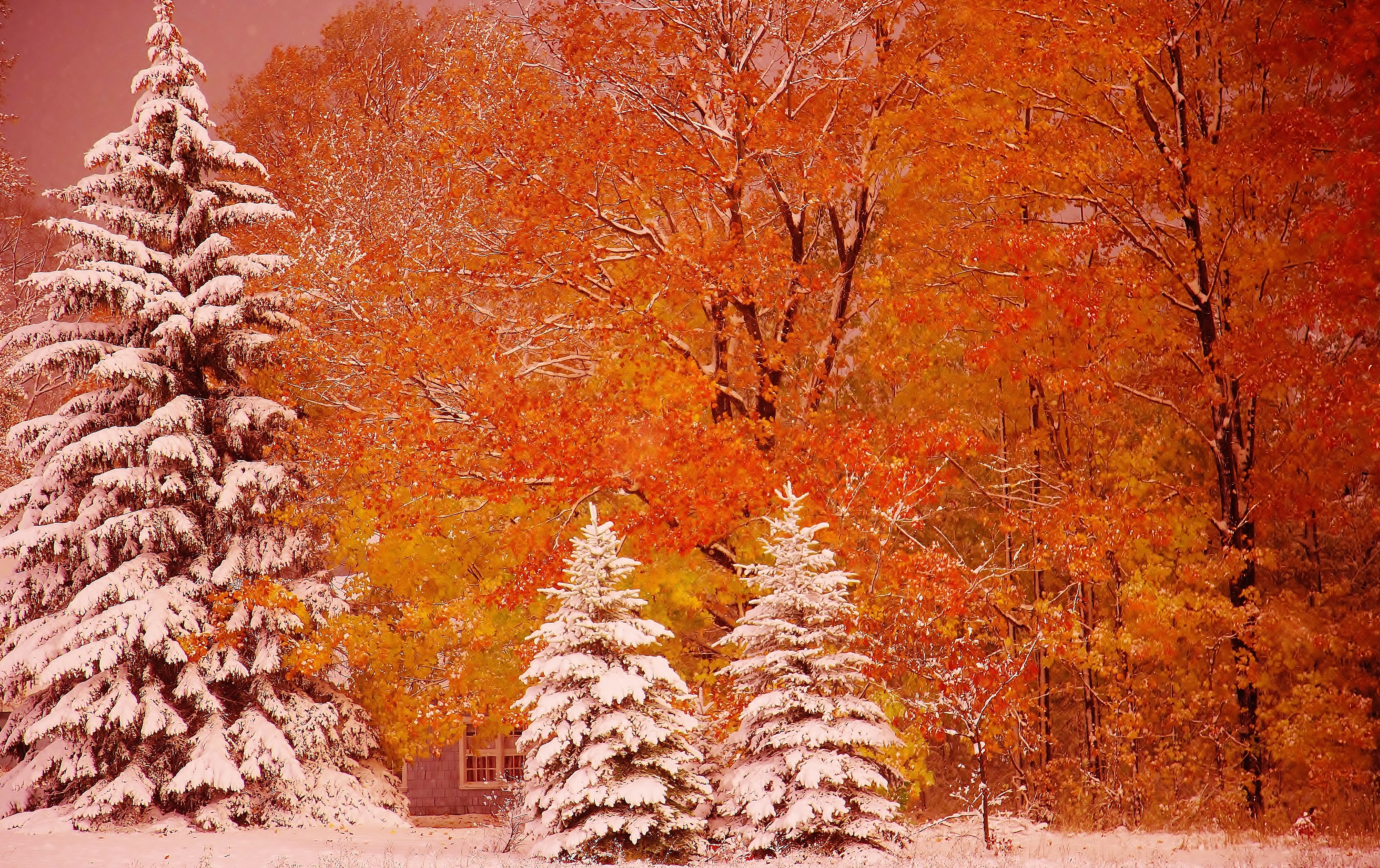 Fall Foliage Iphone Wallpaper First Snow 4k Ultra Hd Wallpaper Background Image