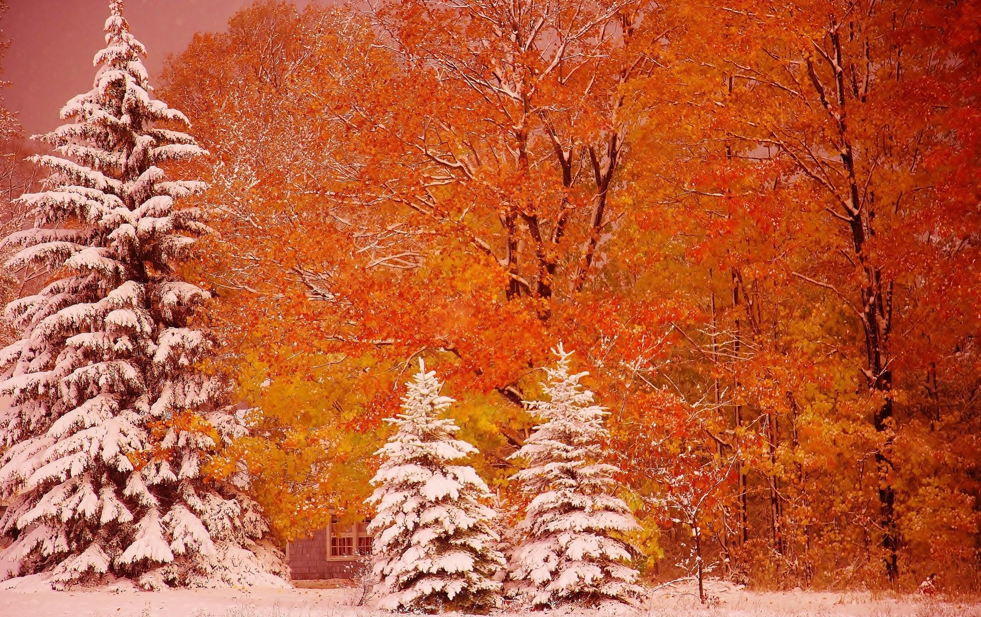Fall Foliage Wallpaper For Iphone First Snow 4k Ultra Hd Wallpaper Background Image