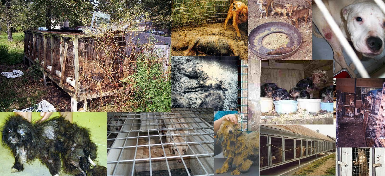 Animal Farm Wallpaper Against Puppy Mills Images Stop Puppy Mills Hd