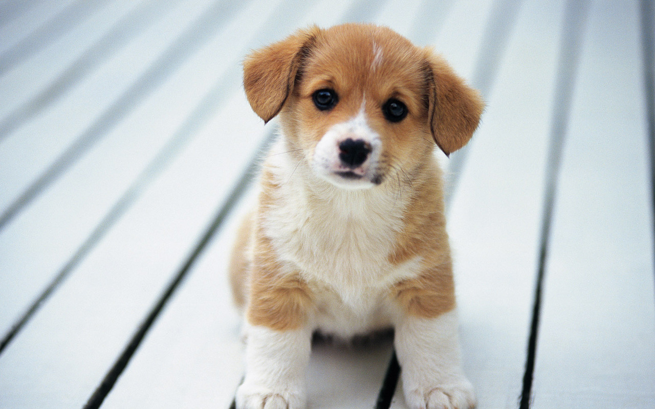Sweet puppy pictures so cute puppies wallpaper 15897245 fanpop fanclubs