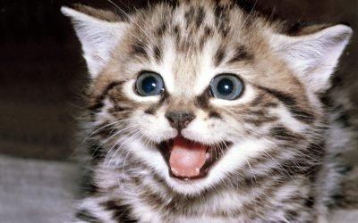 Cute Kitten Wallpaper - Kittens Wallpaper (16094681) - Fanpop