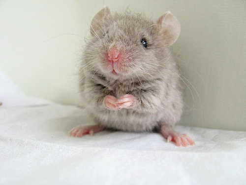 EgoMouse images Cute mouse i found on the internet D wallpaper and