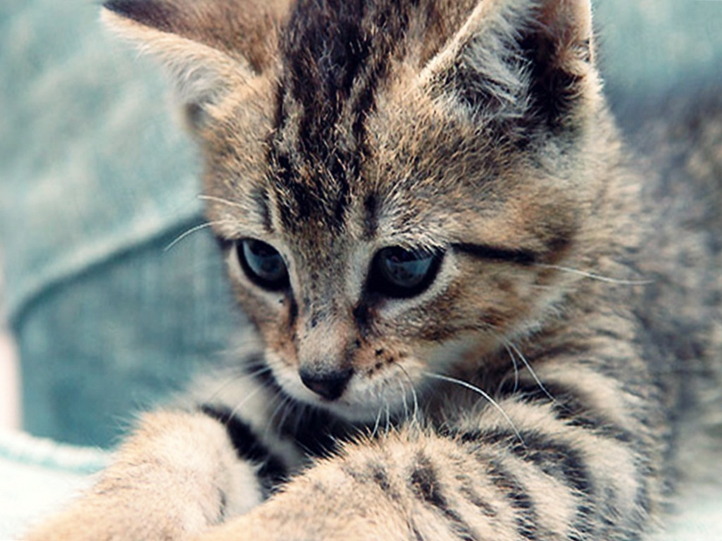 Cute Baby Sleeping Wallpapers Cute Kittens Images Cute Kitten Hd Wallpaper And