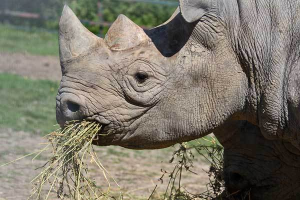 Nice Cute Black Wallpaper Rhinos Images Rhinoceros Wallpaper And Background Photos