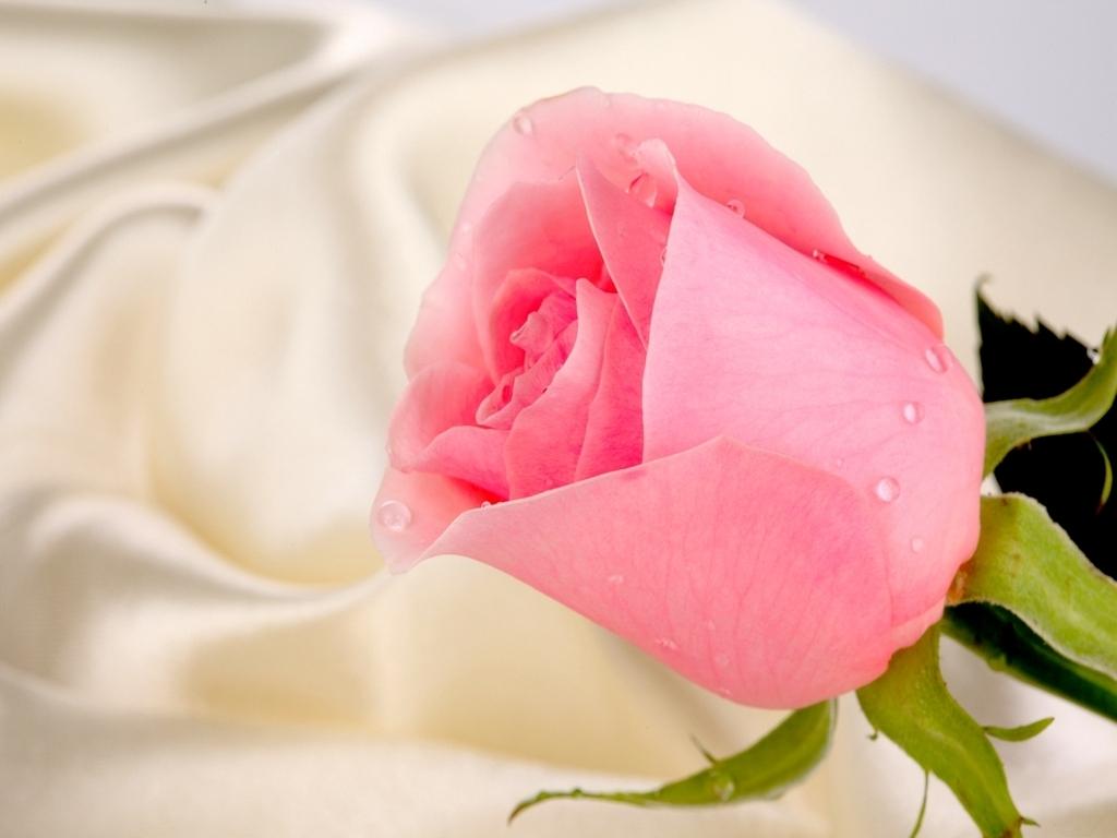 Cute Dreamcatcher Wallpaper Pink Rose For Princess Daydreaming Wallpaper 22779077