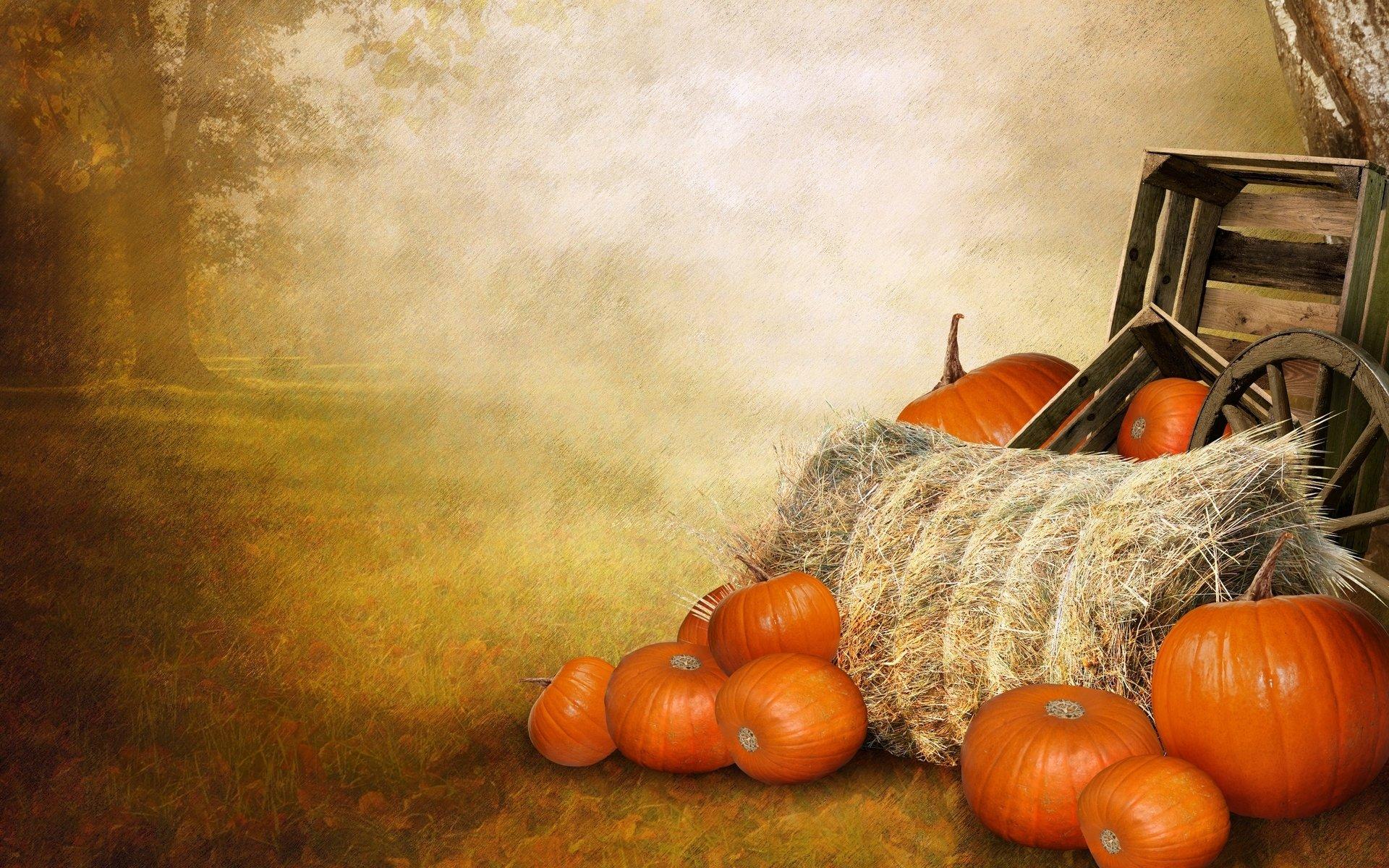 Fall Pumpkin Iphone Wallpaper Fall Full Hd Wallpaper And Background Image 1920x1200