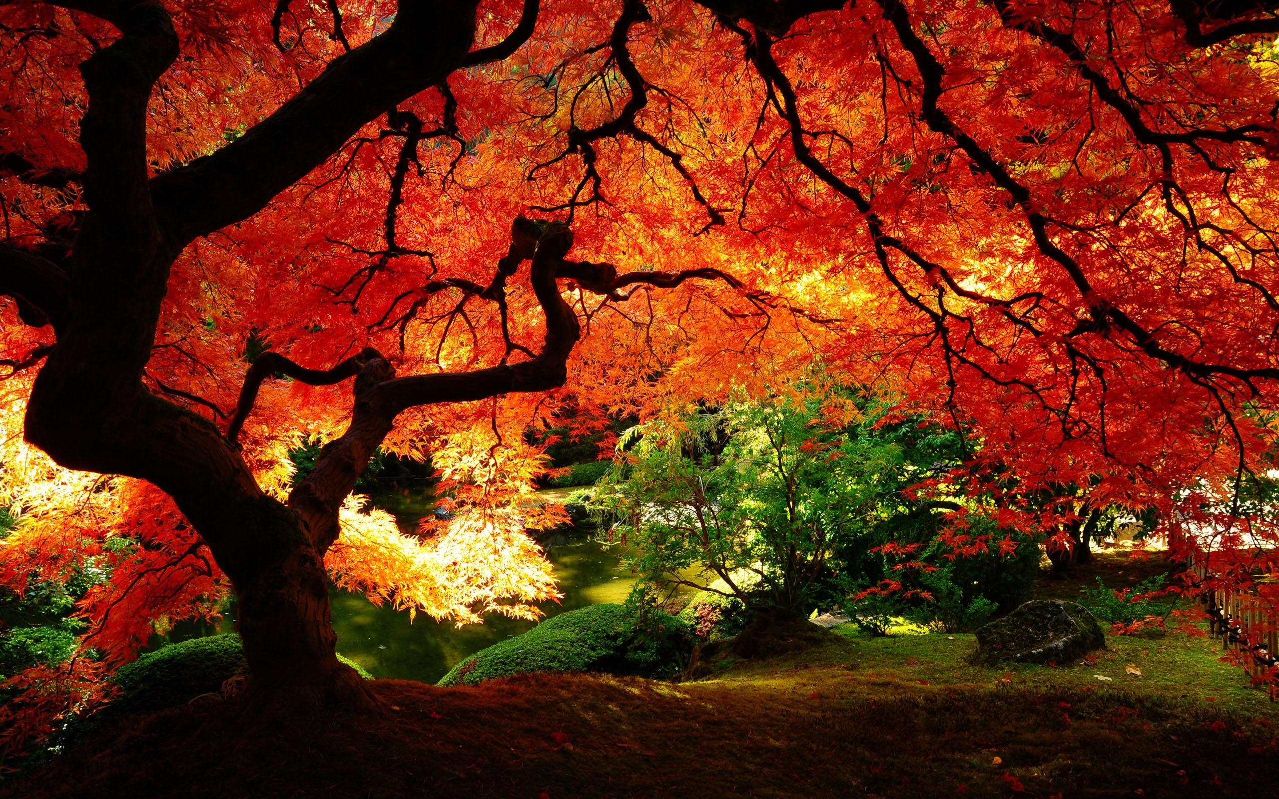 Hd wallpaper background id 330278 2560x1600 earth tree