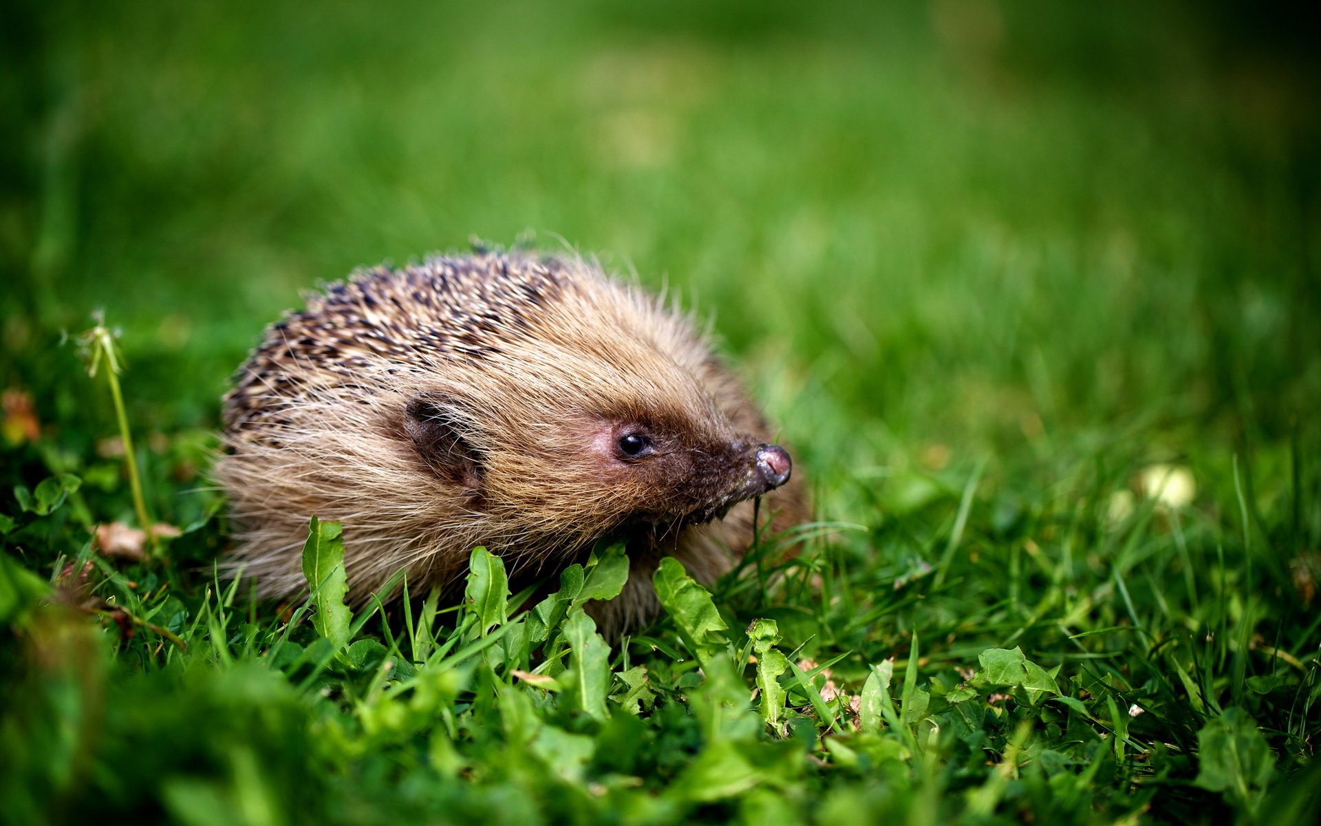 Cute Newborn Baby Hd Wallpapers Hedgehog Full Hd Wallpaper And Background Image