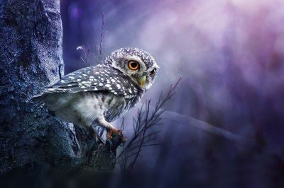 Owl Wallpaper and Background Image | 1900x1267 | ID:338208 - Wallpaper Abyss