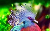 BIRD [19] coolbird [VersionOne] [031157 ...