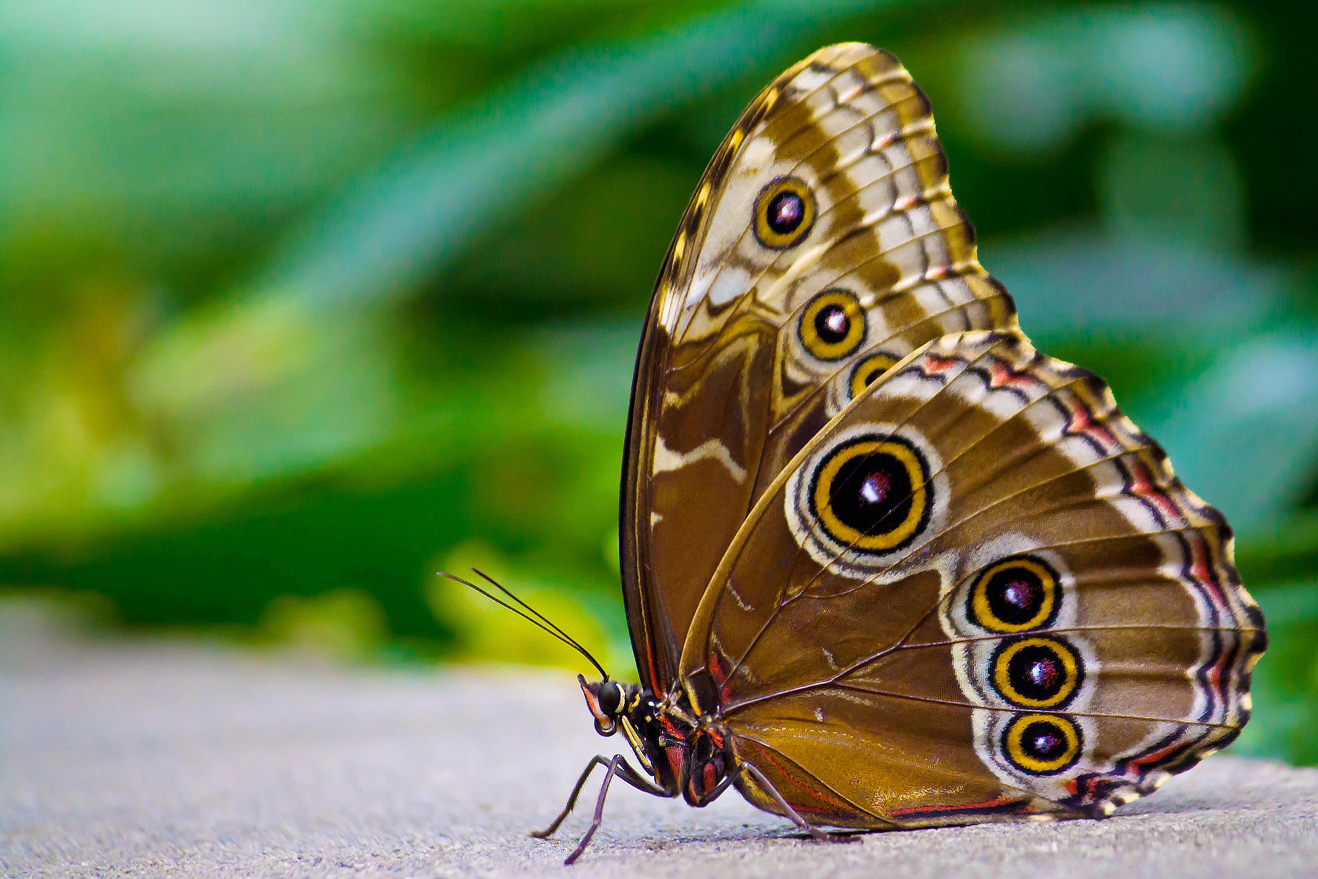 Colourful Iphone X Wallpaper Schmetterlinge Full Hd Wallpaper And Hintergrund