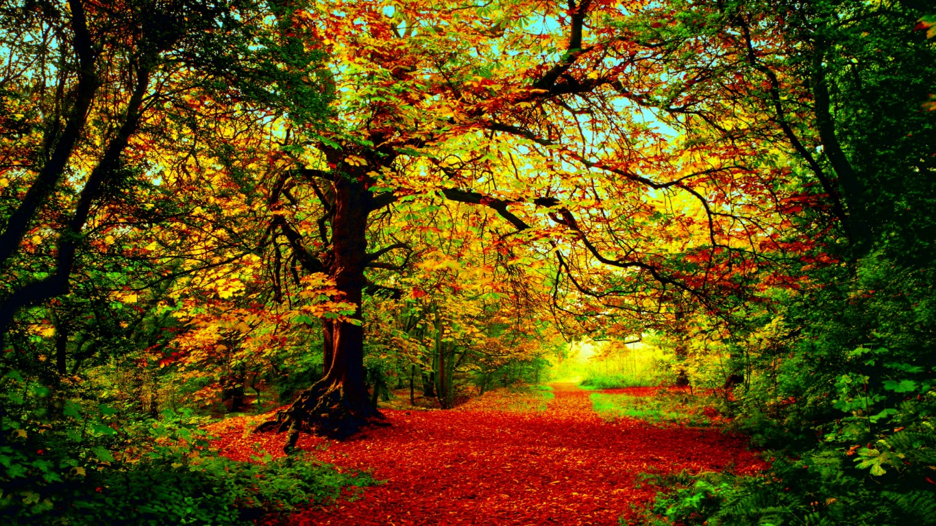 Autumn Fall Wallpaper 1600x900 The Colors Of Autumn Computer Wallpapers Desktop