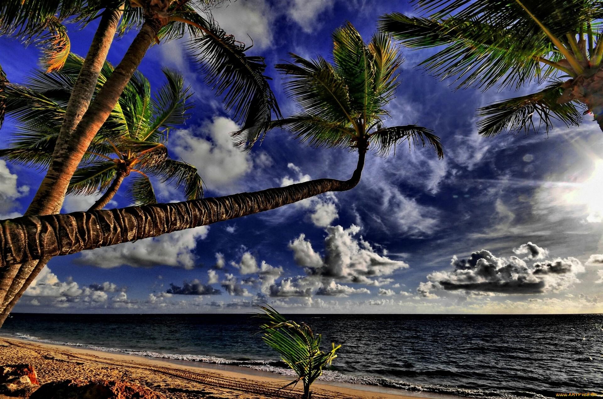 Palm Tree Iphone Wallpaper Palmier Full Hd Fond D 233 Cran And Arri 232 Re Plan 1920x1273