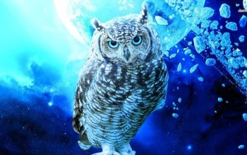 Fall Wallpaper With Owls 725 Owl Hd Wallpapers Background Images Wallpaper Abyss