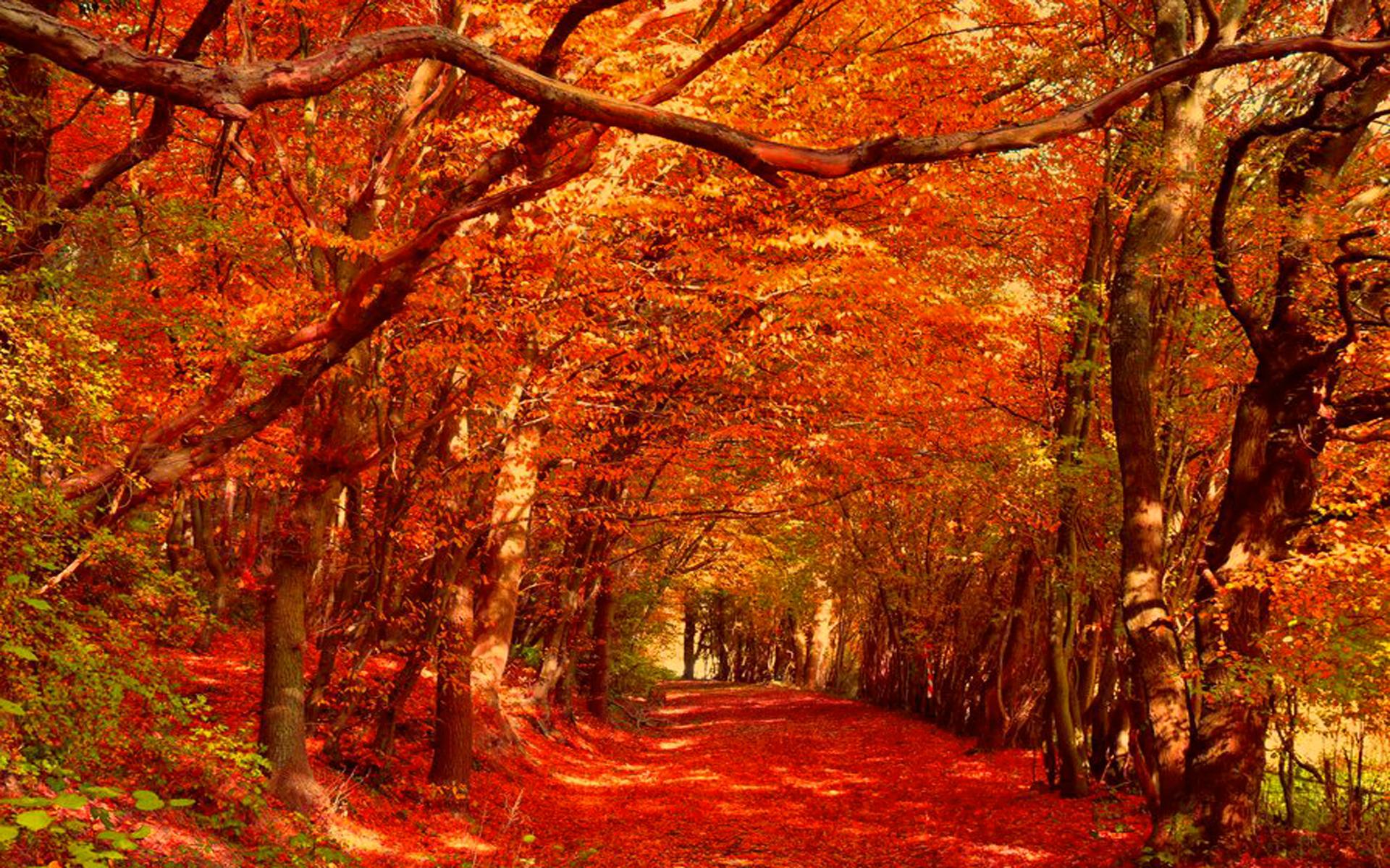 Fall Leaves Phone Wallpaper Art Earth Autumn Wallpaper