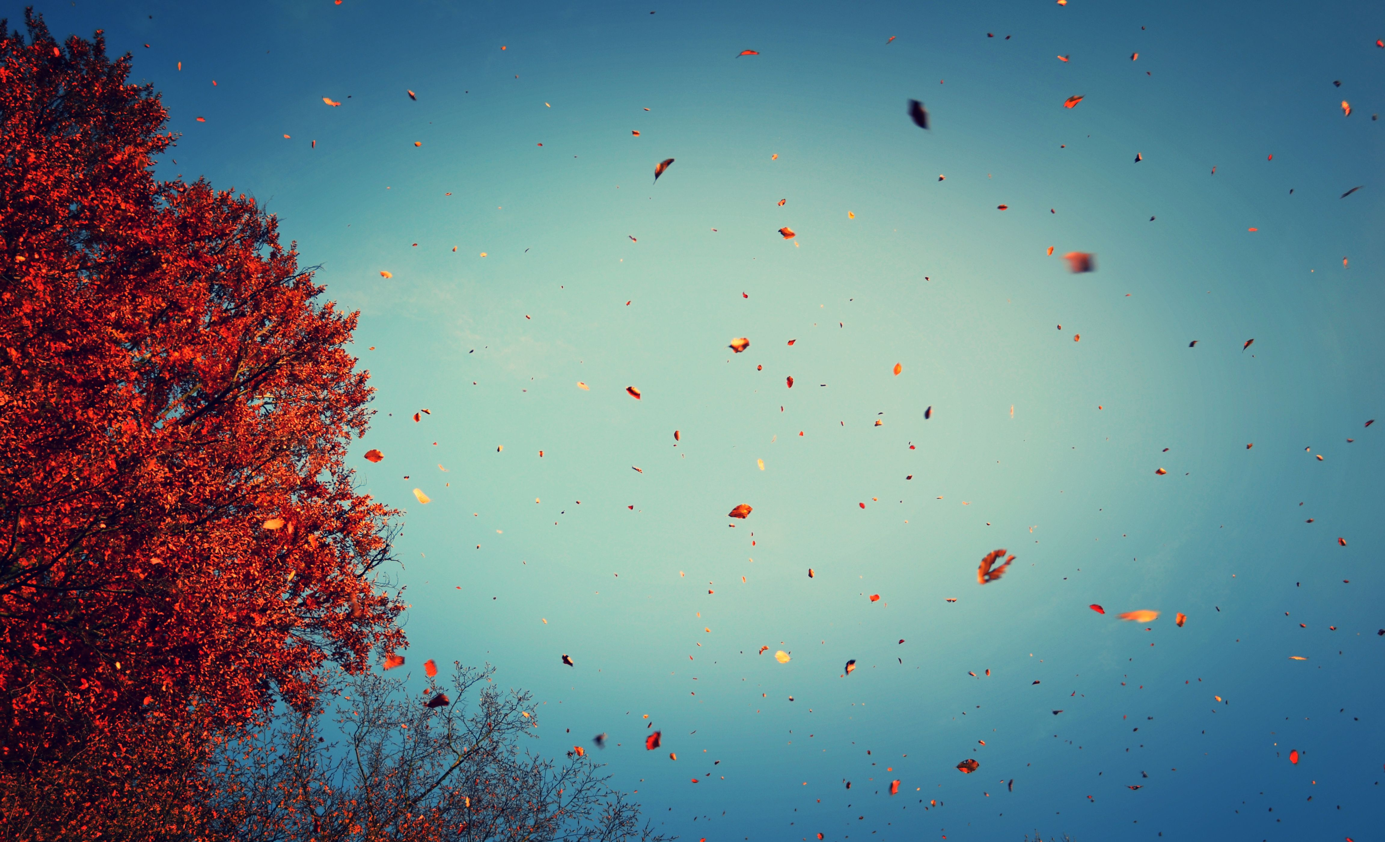 Fall Wallpaper For Iphone 6 Plus Fall Wallpapers Achtergronden 4608x2801 Id 659462