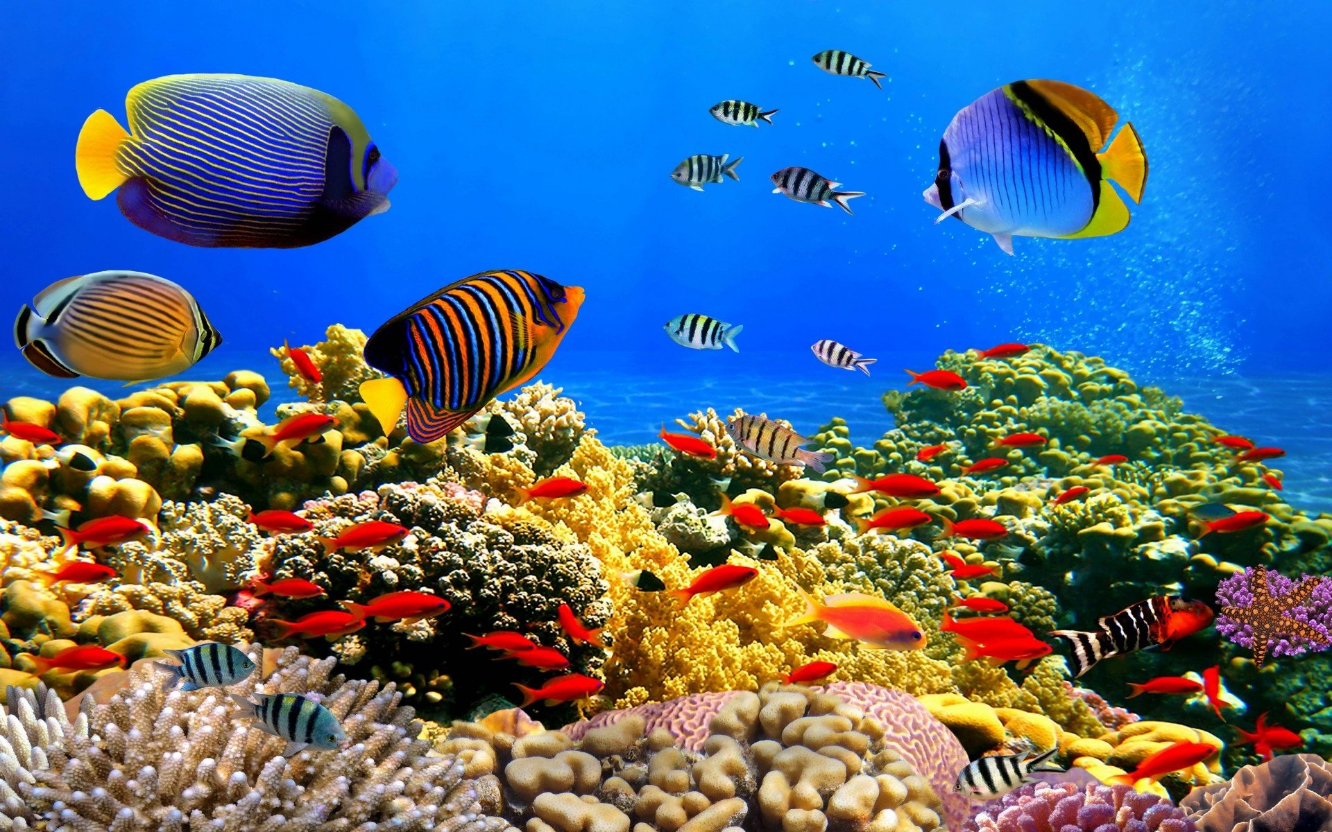 Underwater Iphone Wallpaper Underwater Life Full Hd Fondo De Pantalla And Fondo De