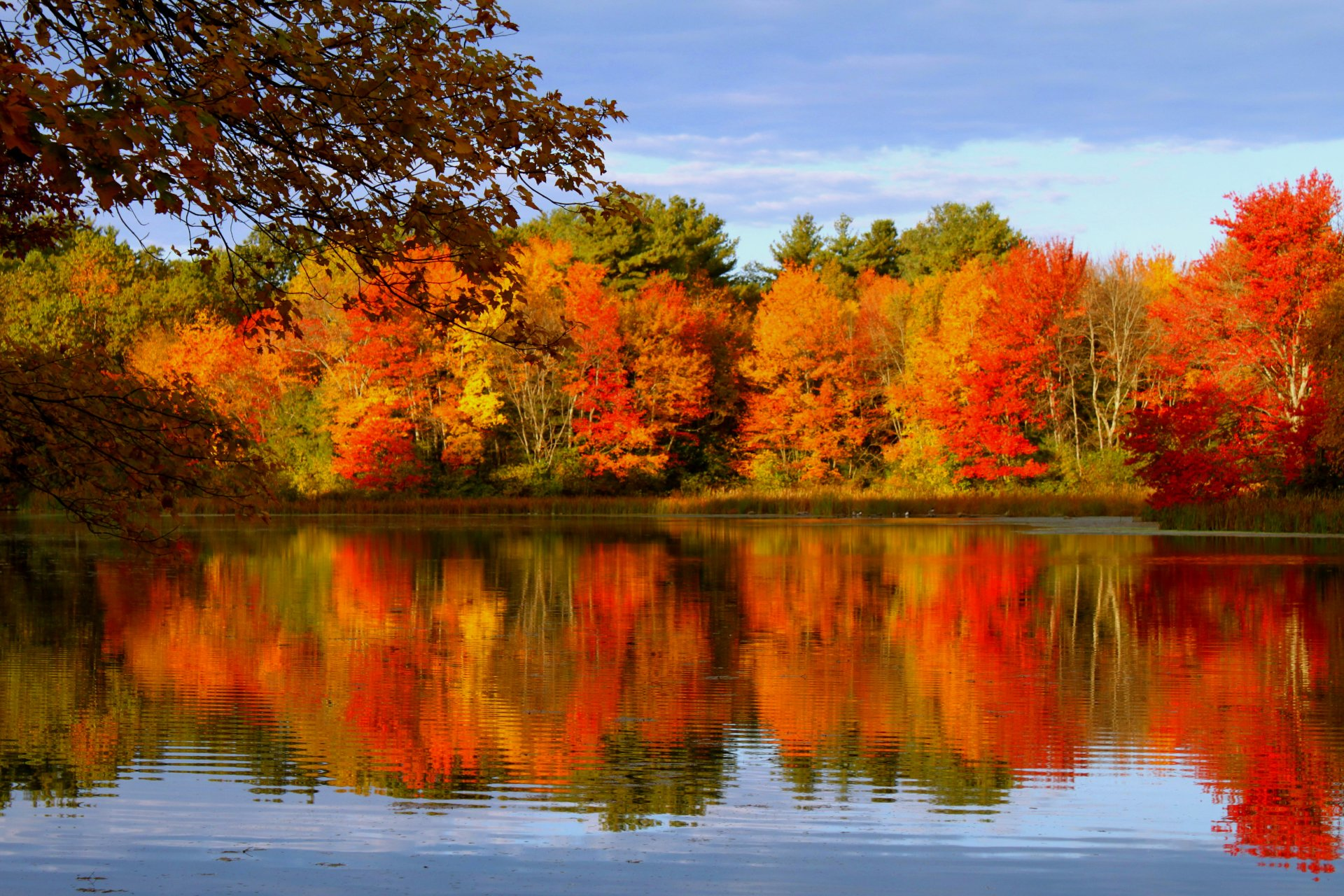 Fall Foliage Iphone Wallpaper Autumn Trees Reflected In Lake 4k Ultra Hd Wallpaper
