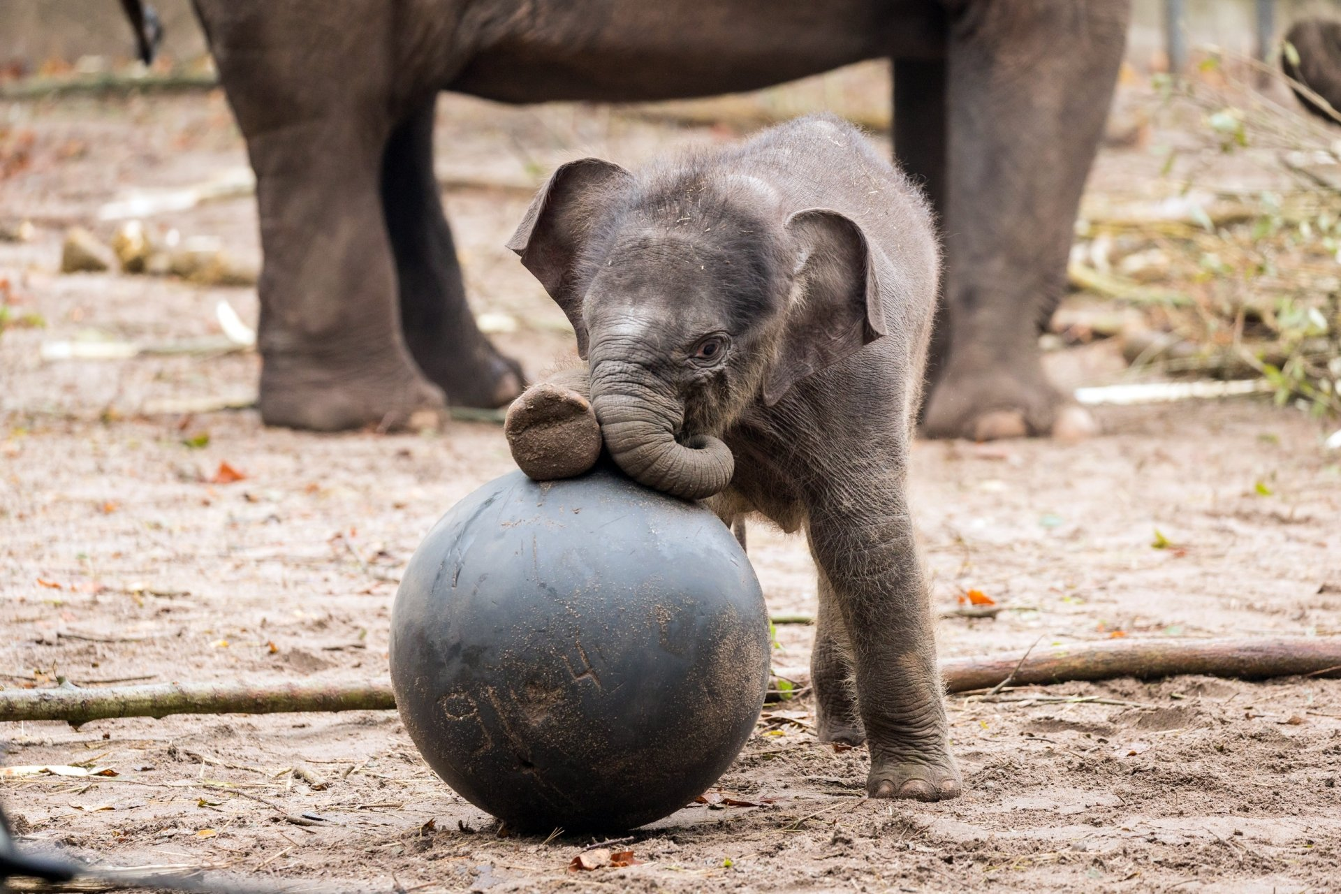 Cute Babies Hd Wallpapers 1366x768 Elefant Hd Wallpaper Hintergrund 2560x1707 Id 766866