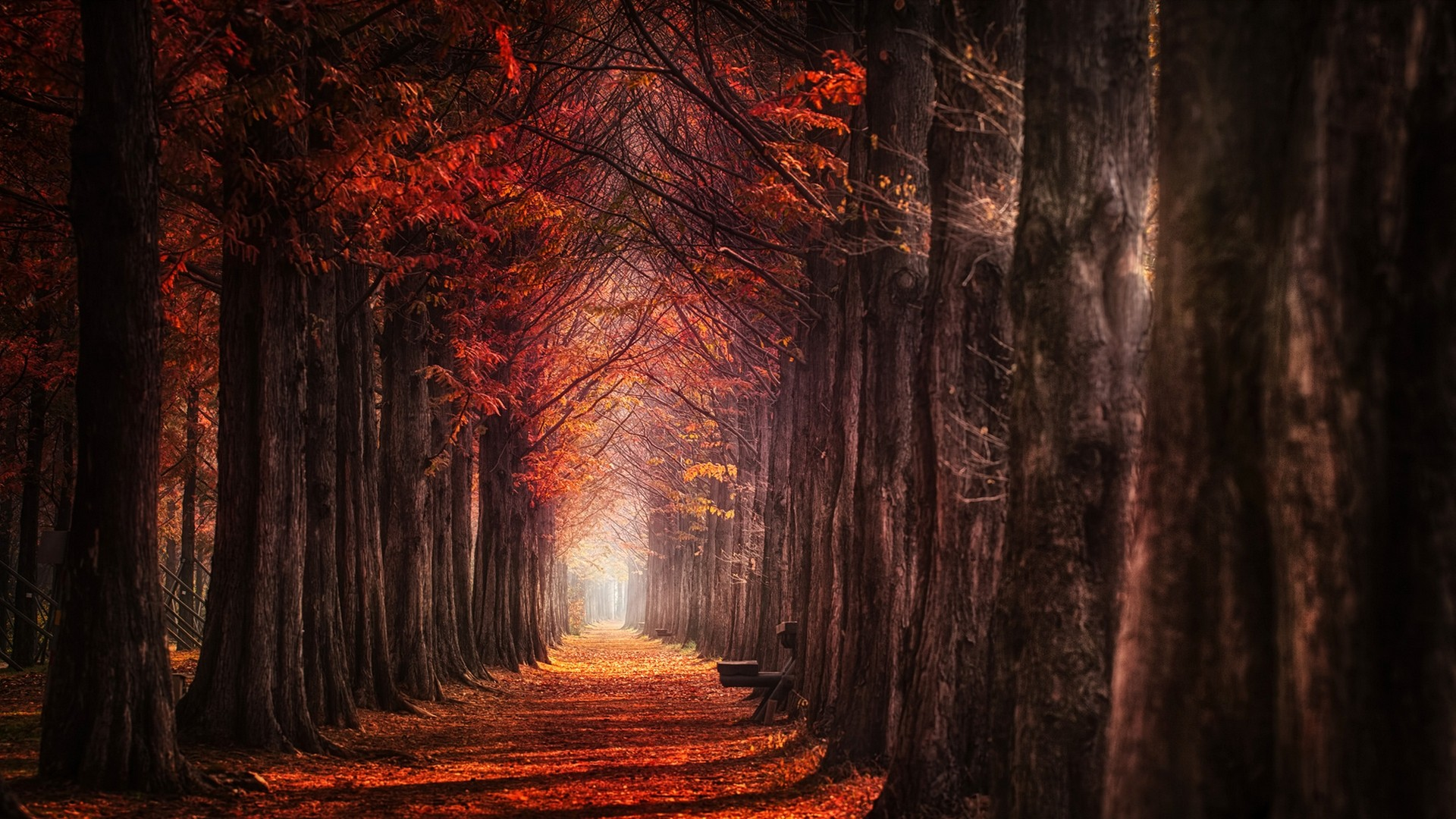 Fall Leaf Iphone Wallpaper Path In Autumn Forest Hd Wallpaper Background Image