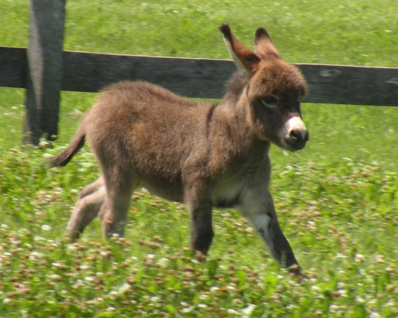 Donkey Wallpaper Donkeys Images Donkey Baby Hd Wallpaper And Background Photos