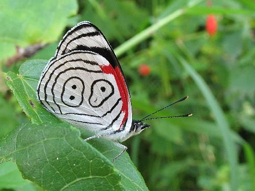 Cute Shoes Wallpaper Rare Butterflies Butterflies Photo 27829045 Fanpop