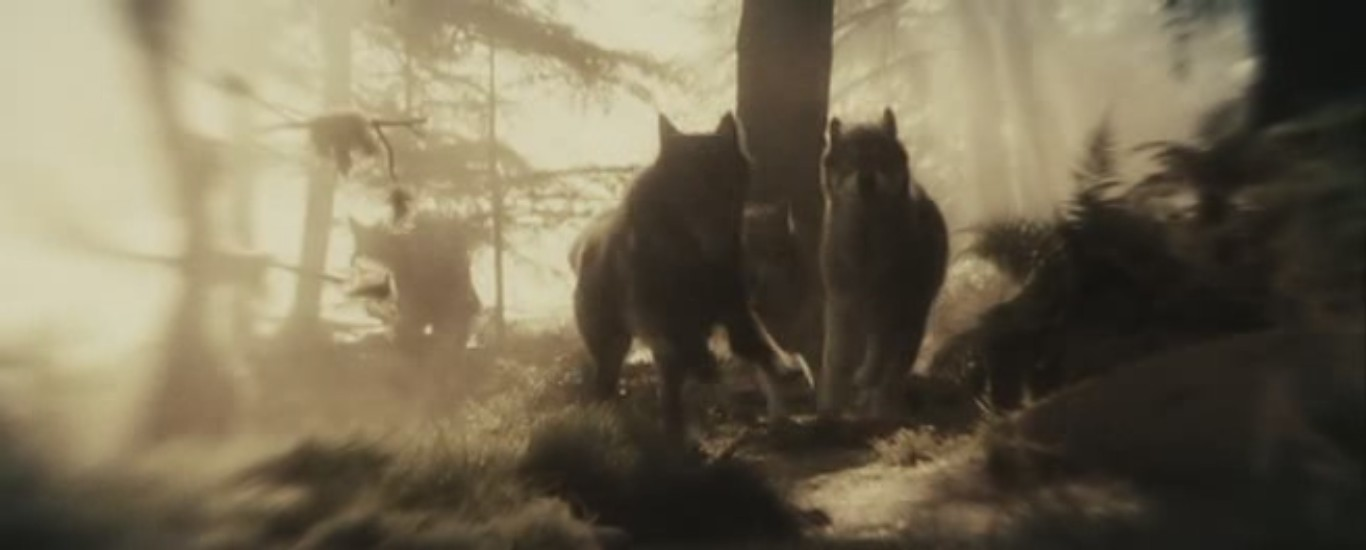 Fan Hd Wallpaper Twilight Wolves Images Twilight Hd Wallpaper And