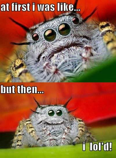 Cute Jumping Spider Wallpaper Arachnology Images Spider Fun Wallpaper And Background
