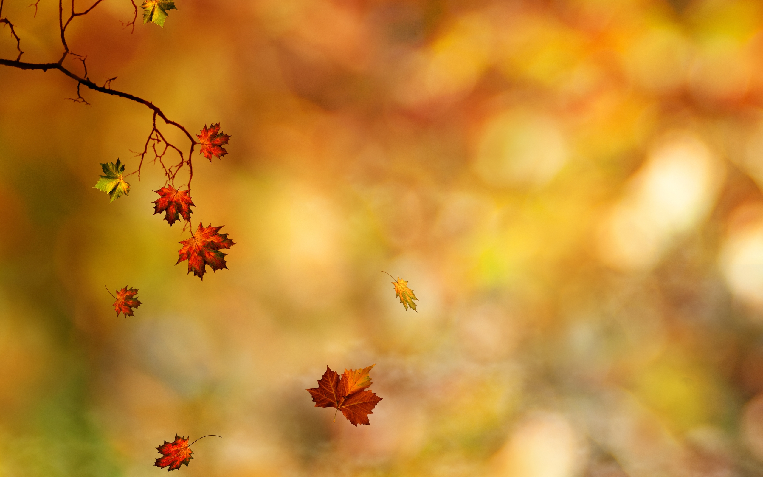 Falling Leaves Wallpaper For Iphone Leaf Hd Wallpaper Background Image 2560x1600 Id
