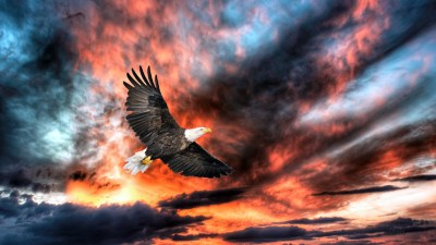 Eagle Full HD Wallpaper and Background Image | 1920x1080 | ID:343977