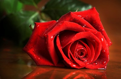 Rose HD Wallpaper | Background Image | 2900x1900 | ID:347413 - Wallpaper Abyss