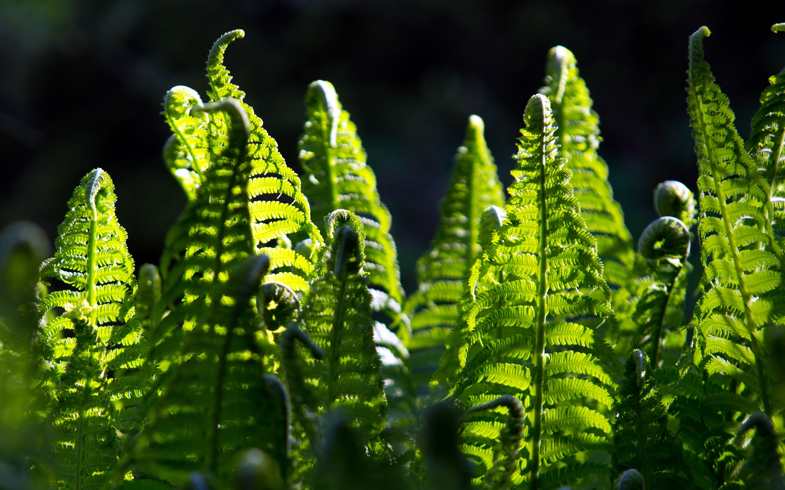 Hd 3d Wallpapers 1080p Widescreen Fern Full Hd Wallpaper And Background Image 2560x1600