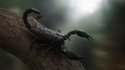19 Scorpion HD Wallpapers | Backgrounds - Wallpaper Abyss