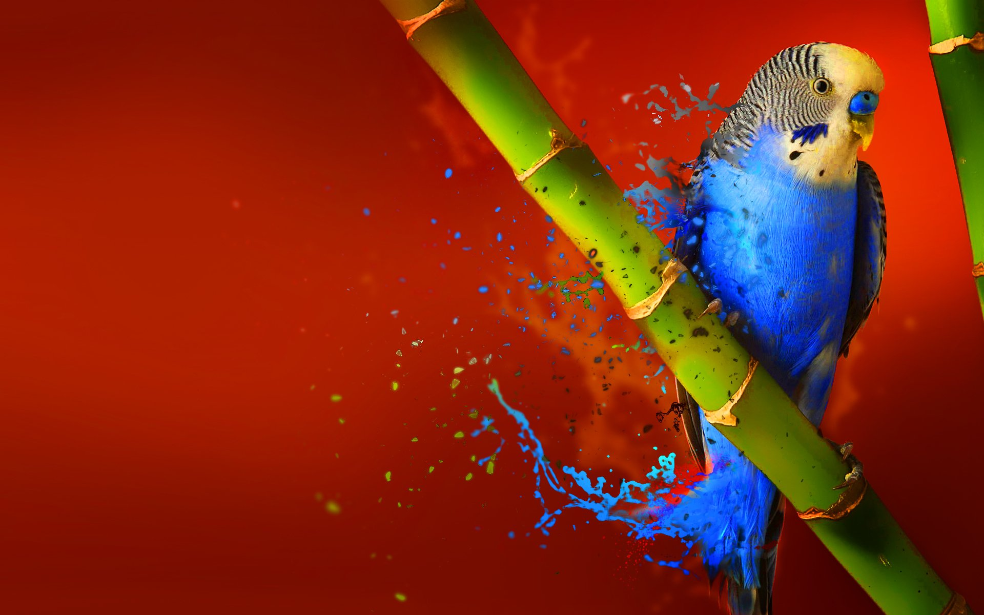 Bird Of Paradise Wallpaper Iphone 5 Budgerigar Full Hd Wallpaper And Background Image