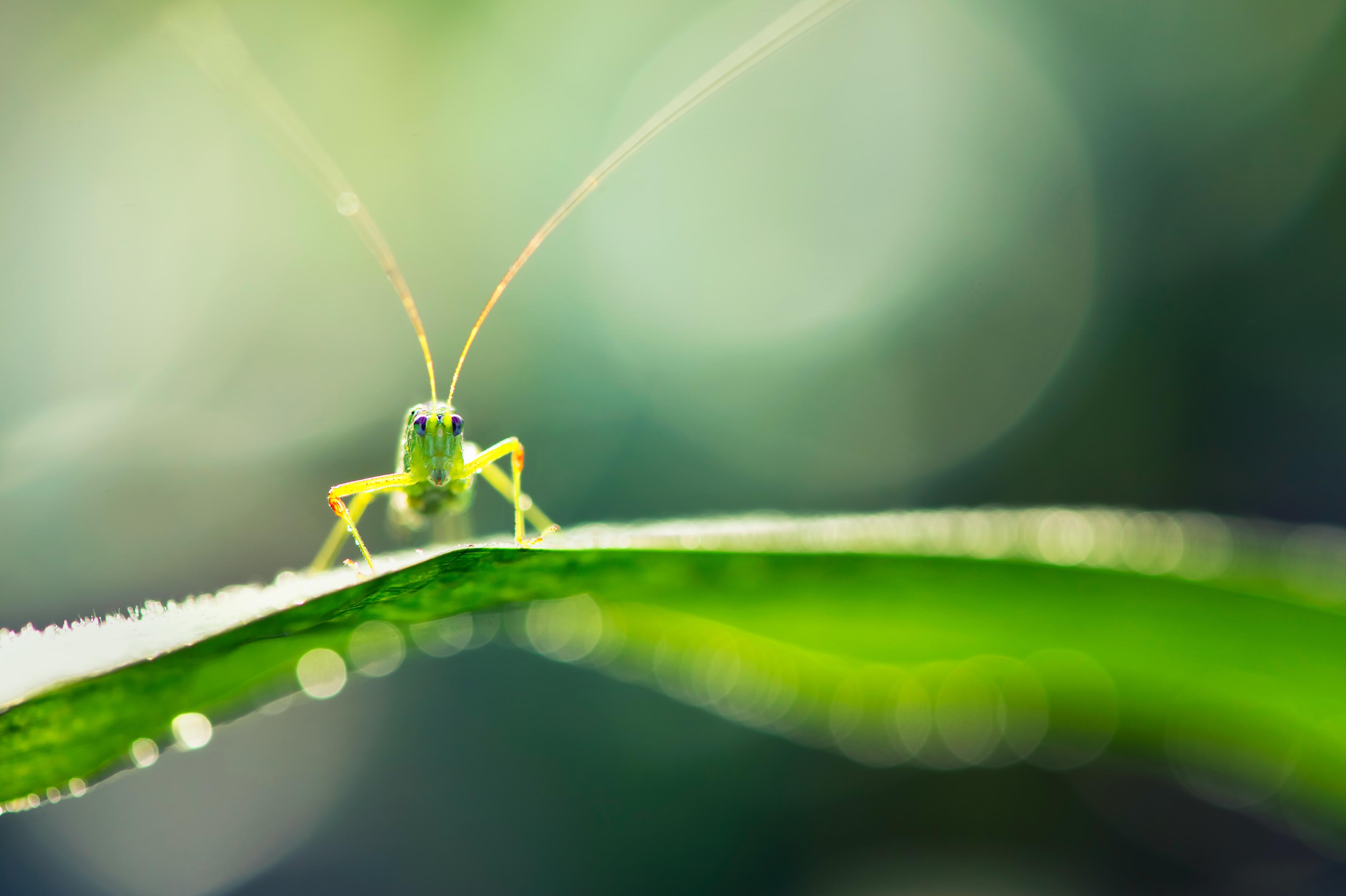 Cool Cute Wallpaper For Iphone Grasshopper 4k Ultra Hd Wallpaper Background Image