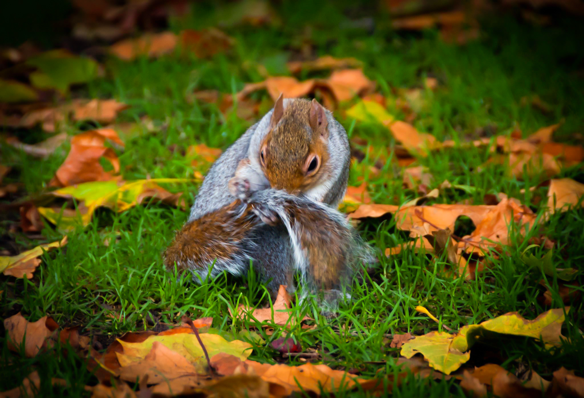 London England Iphone Wallpaper Hyde Park Squirrel 3 Full Hd Wallpaper And Background