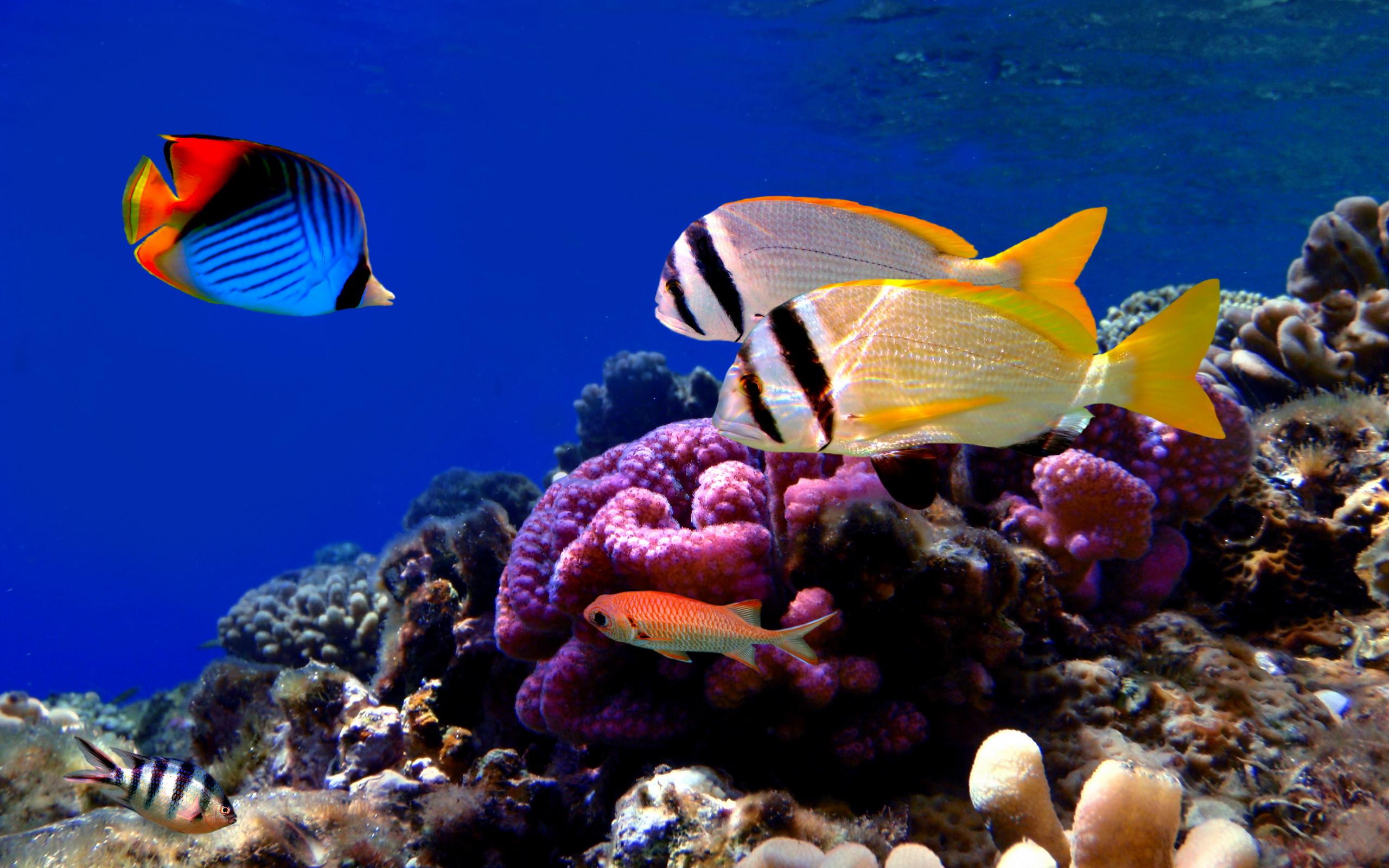 Aquarium 3d Live Wallpaper Pro Poisson Full Hd Fond D 233 Cran And Arri 232 Re Plan 2560x1600